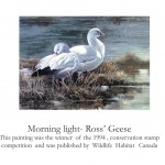 Conservation Stamp Prints, 1994 by Ahmad (Alan) Sakhavarz Morning Light - Ross' Geese Wildlife Habitat Canada Ahmad (Alan) Sakhavarz is a signature member of the Society of animal artists and the Oil painters of America. Photo Credit: Ahmad (Alan) Sakhavarz